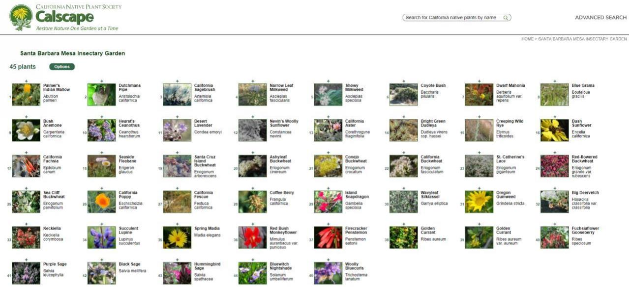 Calscape list of plants in Santa Barbara Mesa Insectary Garden