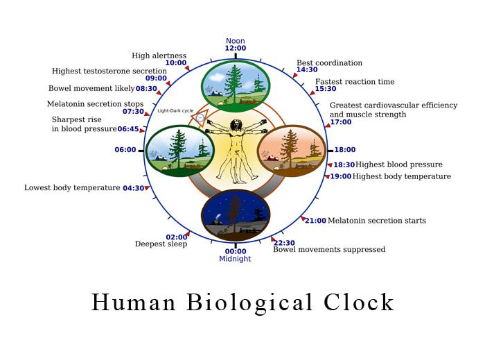 Human Biological Clock - Lighting for Autism